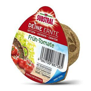 Brillant Substral Ta Récolte Saatkegel Tôt-tomate-tomates Tomate Graines Culture Légumes-afficher Le Titre D'origine Suppression De L'Obstruction