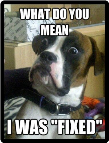 Funny Dog Humor Boxer I Was Fixed Refrigerator Magnet