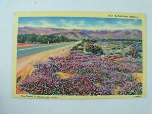 Vintage 1930's Highway near Indio, Desert in Bloom, California CA Linen Postcard