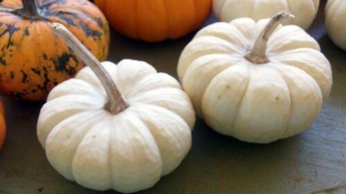Mini Pumpkin Seeds Adorable Decoration BABY BOO 10 Fresh Seeds Edible