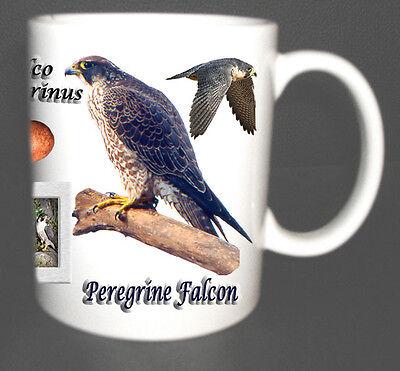 Peregrine Falcon Bird Of Prey Coffee Tea Mug Limited Edition Gift Egg Nest Ebay