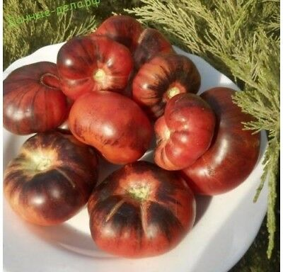 Tomato Ussuri Tiger Seeds orange striped tomatoes organic Ukraine 20 seeds D