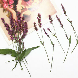 12pcs-Pressed-Dried-Flowers-Persicaria-hydropiper-for-Scrapbooking-Art-Craft