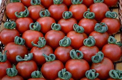 VEGETABLE TOMATO GARNET 20 FINEST SEEDS