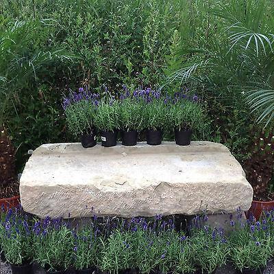 Sinnvoll Antike Gartenbank Kräuter Tisch Pflanztisch Natursteine Sitzbank Mauer Steinbank Gute QualitäT