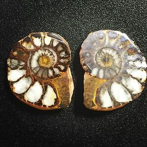 Natural Ammonite Fossil Matching Pair Morocco Cretaceous Period Ancient 19.06g