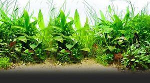 250-graines-mix-plantes-pour-aquarium-decor-seeds-semillas