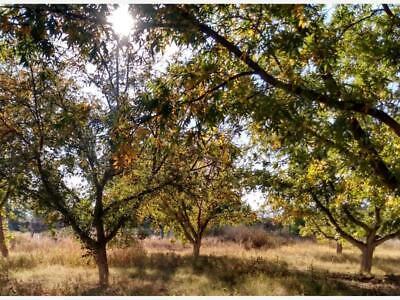 Finca/Rancho en Venta en El Herradero
