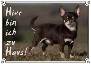 Bouclier de chien avec Chihuahua brun - Enseigne en métal de qualité supérieure