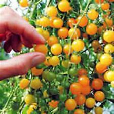 ORGANIC VEGETABLE TOMATO CURRANT YELLOW 750 FINEST SEEDS BULK