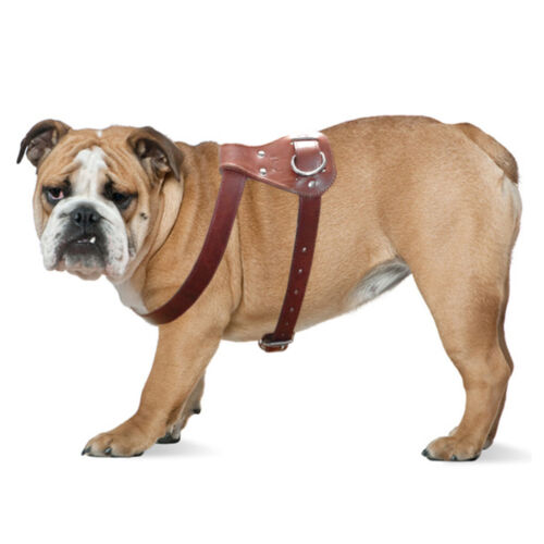 Brown Best Genuine Leather Pet Dog Harness Heavy Duty for Medium Large Dogs