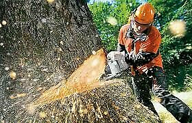 Chainsaw in Western Cape | Gumtree Classifieds in Western Cape