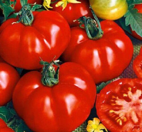 Solanum lycopersicum Tomato seeds 100 Graines de Tomate Marmande