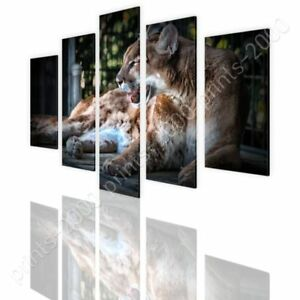 Cougar-by-Split-5-Panels-Ready-to-hang-canvas-5-Panels-Wall-art-giclee