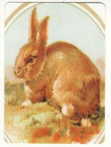 ANIMALS-RABBITS-AR7-Single-Modern-WIDE-Swap-Playing-Card