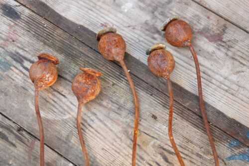 Set of Five Small Metal Poppy Seed Head Decorative Garden Rusted Stake 50cm