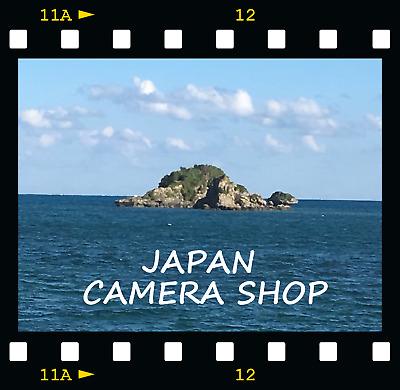 chrysanthemum_japan