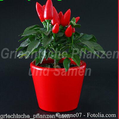 Zimmerchili rot Chili * 10 Samen * Chiliernte das ganze Jahr * tolles Geschenk