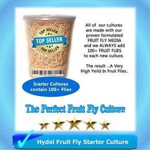 Fruit Fly Starter Culture (Flightless - Drosophila Hydei) + FREE Fruit Fly Kit