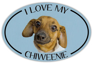 Oval Dog Breed Picture Car Magnet I Love My Chiweenie Bumper