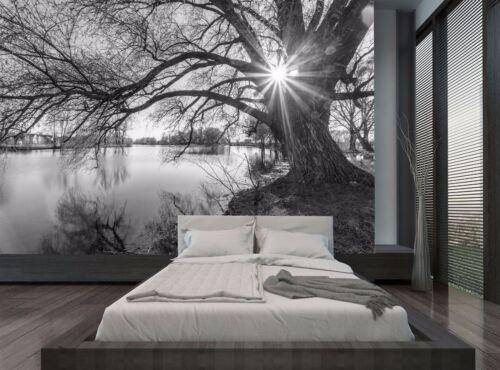 Black And White Tree Sunrise Lake Wall Mural Photo Wallpaper GIANT WALL DECOR