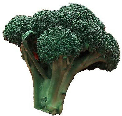 1000 EARLY FALL RAPINI BROCCOLI Raab Brocoletti Seeds
