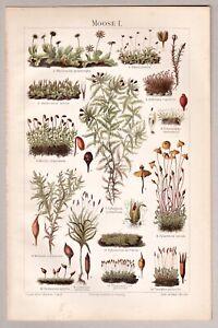 Moos, Moose - Diverse Abbildungen, 2 Blatt - Chromolithographie + Holzstich 1896