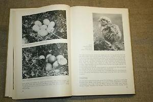 Jäger Trendmarkierung Buch Federwild Wildgänse Auerwild Fasan Wildenten Rebhuhn Ddr 1982