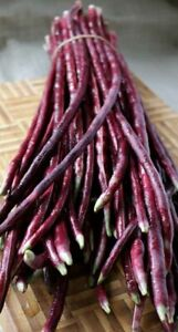 15+ Purple-red Yard Long Bean seeds Asian Chinese Noodle Bean String beans USA
