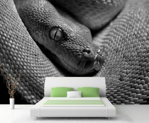 Nappes Papier peint XXL Poster Papier Peint Serpent Vert