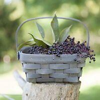 Longaberger Small Berry Basket - 3 Colors Retiring