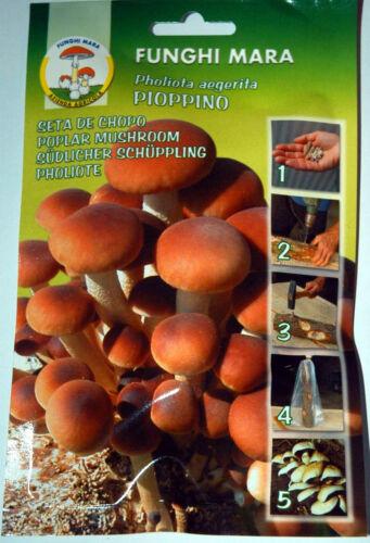 Pholiota Aegerita Chiodi di micelio Pioppino 1 busta da 20 chiodi
