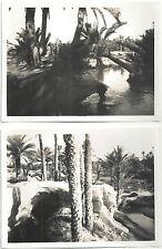 """PHOTO c.1930~""""DATTIERS &  PALMIERS""""~OASIS de GABES~TUNISIE-"""