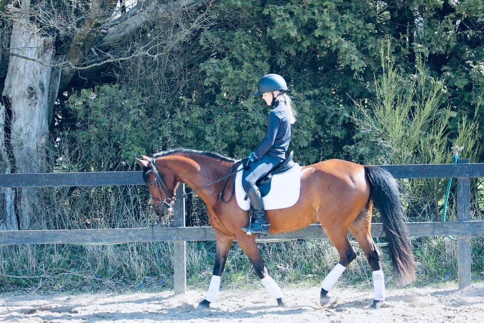 Welsh pony og Cob, hoppe, 13 år
