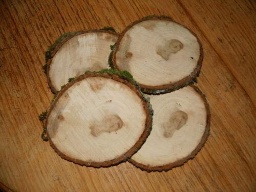 Holzscheibe 20 x 2 cm sehr selten Ulme 5 Baumscheiben Rüster