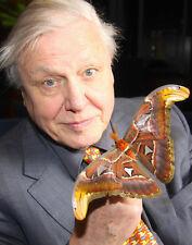 David Attenborough UNSIGNED photo - H6029 - Atlas Moth