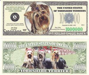 100-Yorkshire-Terrier-Dog-Yorkie-Canine-Novelty-Bills