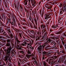 Soft Red Earthworm 50 Pcs Fishing Bait Worm Lures Crankbaits Hooks Baits Tackle
