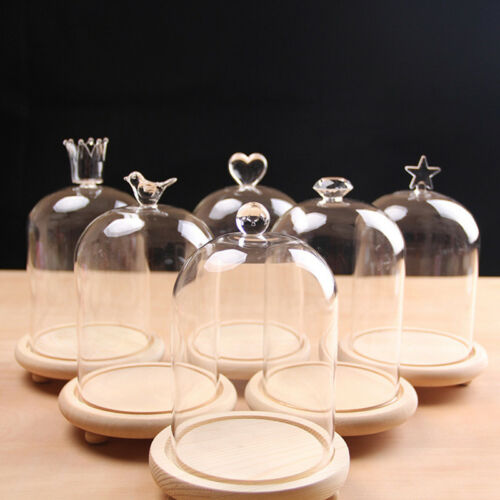 Clear Glass Dome Bell Jar Display Stand Cloche Decoration With Wooden Base New
