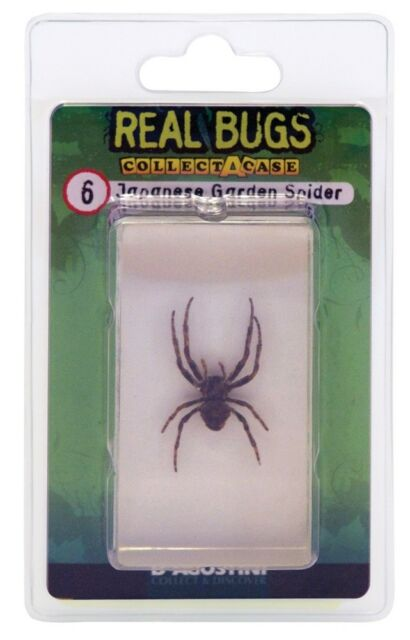 DeAgostini REAL BUGS: Japanese Garden Spider Bug  Free Shipping! Lucite  Sealed