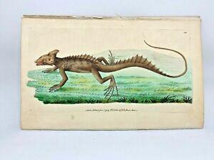 Basilisk - 1783 RARE SHAW & NODDER Hand Colored Copper Engraving