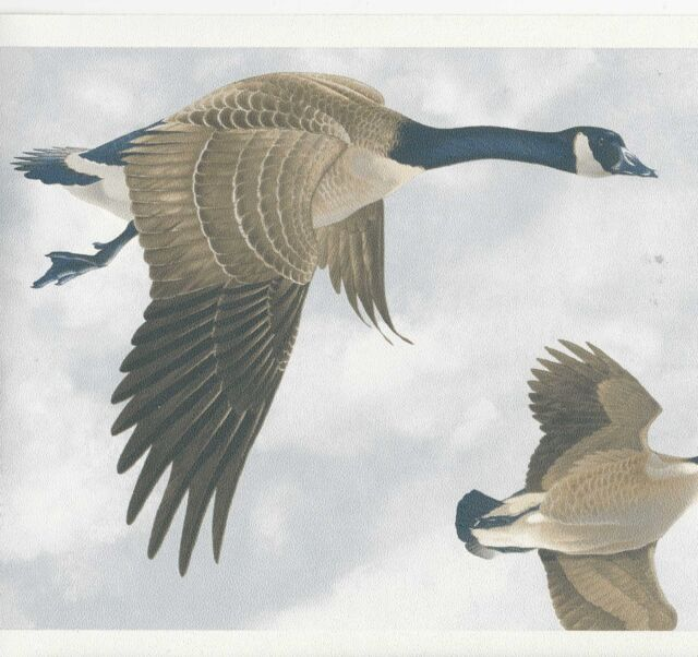 Canada Geese In Flight Wallpaper Border Only 8 Norwall Borders 400