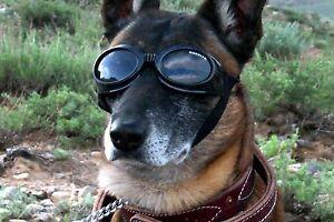 Doggles ORIGINALZ Dog Goggles Sunglasses Eye Protection BLACK Medium