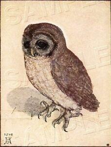 Albrecht Durer YOUNG OWL Little BIRD *CANVAS* Antique Image ART Print ~ LARGE