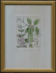 VINTAGE ORIGINAL ETCHING PEA PODS BOTANICAL AP PROOF AQUARTI  ITALY FRAMED PRINT