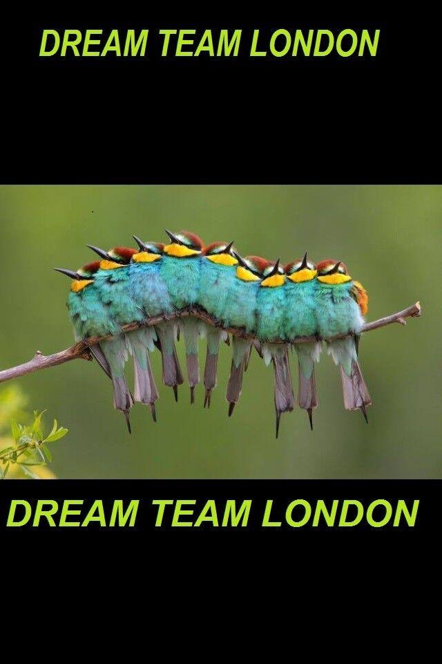 teamdream7
