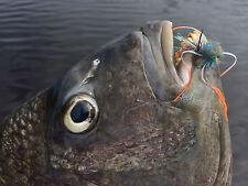 Fly Fishing Flies (Redfish Sheepshead Permit Bonefish) Blue Crab Fly (6 flies)