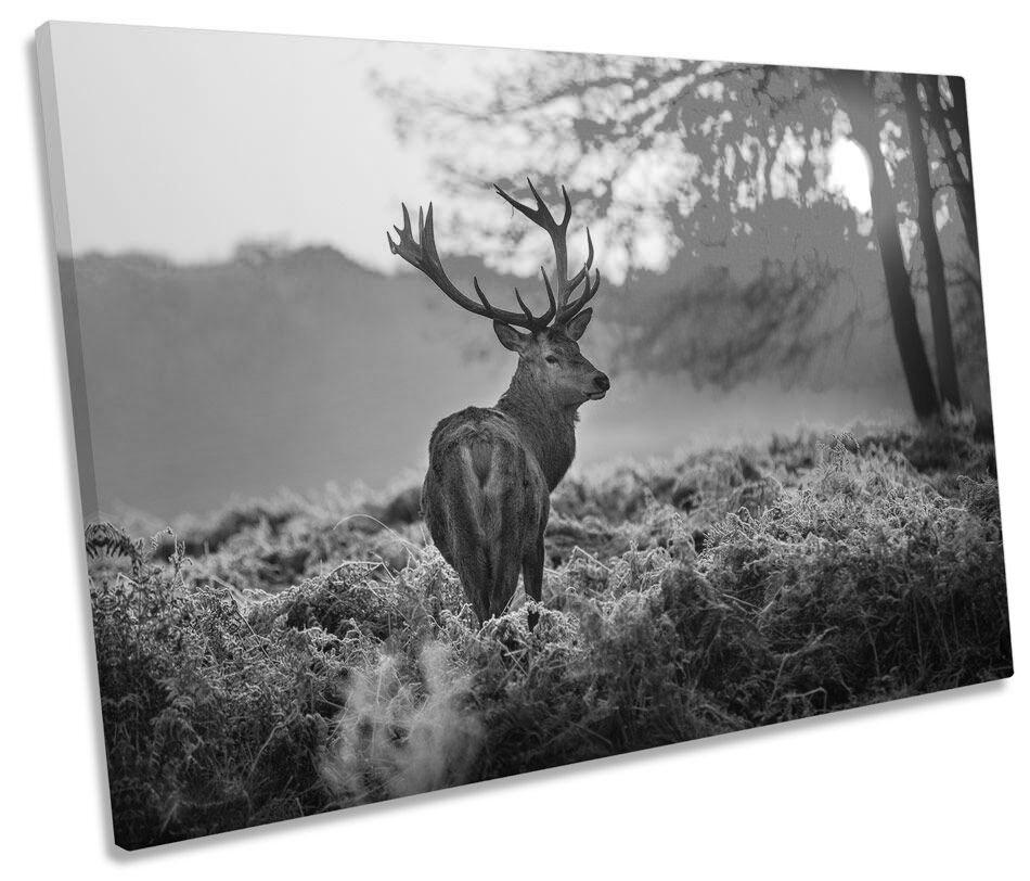 Stag Deer puesta de sol sol sol bosque blancoo y negro LONA parojo arte Foto impresión única 2f6da0