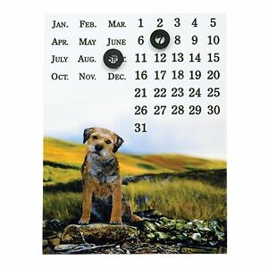Border fine arts a24970 VIEWPOINT frontière terrier chien calendrier magnétique