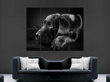 Lindo Perro Negro Labrador Gigante Pared Poster Foto Impresión Grande Enorme